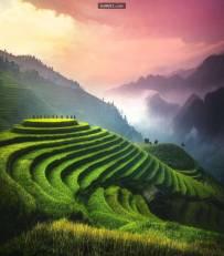 越南水稻梯田