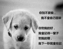 狗狗永遠都是最好的朋友。。