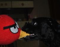 可怜的angry bird XD