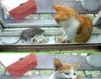 出售一只没有用的猫!