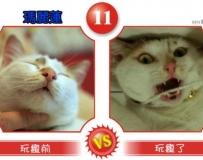 甜心變惡魔? 貓狗「變臉」比賽超爆笑!