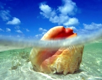 哪個是你心目中最美的海呢?
