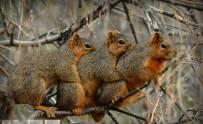 可爱松鼠口味重 3只一起抱抱