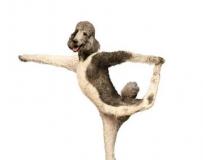 狗狗也玩瑜伽?可爱极了!