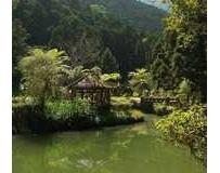 台灣中部- 溪頭妖怪村(好山好水不無聊)
