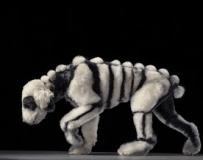 惊艳的宠物狗狗艺术写真