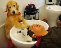 会洗头的的狗