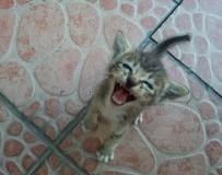 早上突然出現我家的小貓