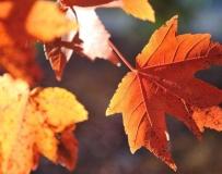 抓住秋天的尾巴。。。