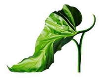 极有创意的环保鞋子