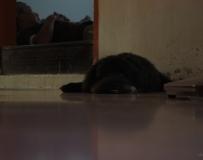 狗狗  睡午觉