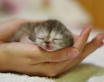 猫咪超强睡姿集锦
