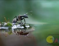 雨天里的昆虫世界