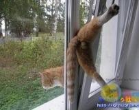 貓才有的特殊才藝 !!