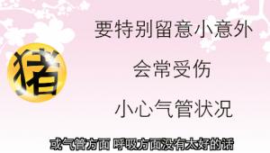 【猪- 健康】五鬼白虎侵犯 当心损伤