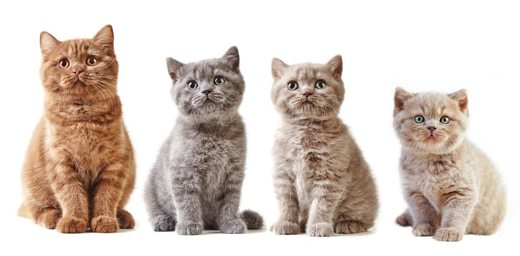 猫咪疗愈人心 有助降低心血管疾病