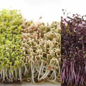 痛风不能吃发芽菜?其实更应该避免摄取干货类和肉类