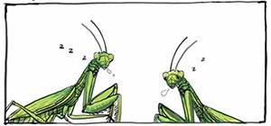螳螂的梦话