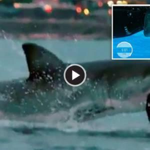 菲尔普斯VS鲨鱼原来是场骗局!