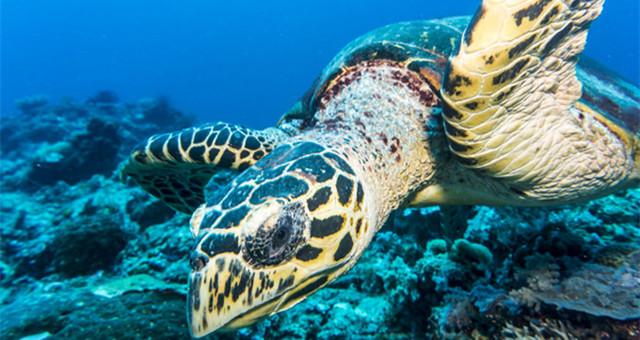 【网友游记】世界第二大珊瑚礁群就在这!潜水发烧友的天堂!