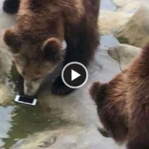 """江苏男喂熊误扔iPhone 网友:最贵的""""苹果"""""""