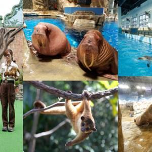 """香港海洋公园""""亲亲动物月""""  还可以跟海象一起约会!"""