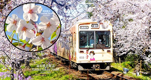 【网友游记】从城市到郊外,追逐大阪、京都、东京那场樱花梦!