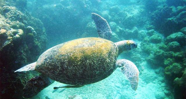 【网友游记】第一次踏进热浪岛的怀里,我爱上了浮潜!