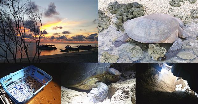 走入山打根海龟岛公园:趴在沙滩静静看海龟产蛋和孵化过程