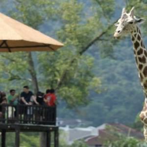 动物园保护动物有名无实    自然生态受侵害政府无权管制