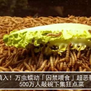 慎入!万虫蠕动「囚禁喂食」超恶影片曝 500万人敲碗下集狂点菜