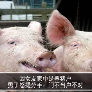 因女友家中是养猪户 男子怒提分手:门不当户不对