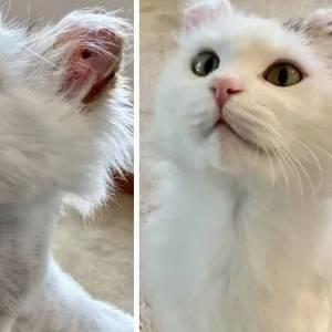 网友分享猫咪被收养前后对比照,一只只眼神都温柔有光了!
