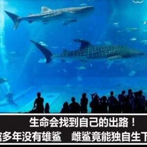 生命会找到自己的出路!水族馆多年没有雄鲨 雌鲨竟能独自生下小鲨鱼