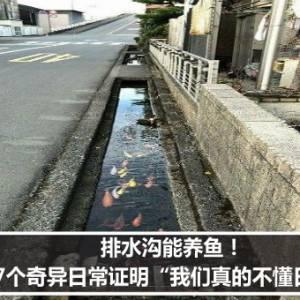 """排水沟能养鱼! 27个奇异日常证明""""我们真的不懂日本"""""""