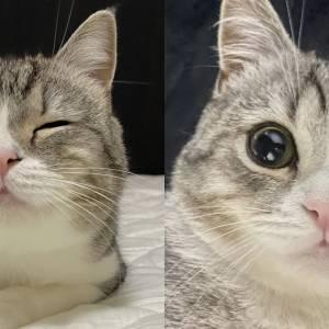 会自己蹲马桶的猫咪,每天吃睡玩玩,就成了油管头号网红!