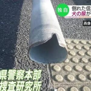 红绿灯突然倒了,日本警方调查4个月给出结论:狗子给它尿断的?!
