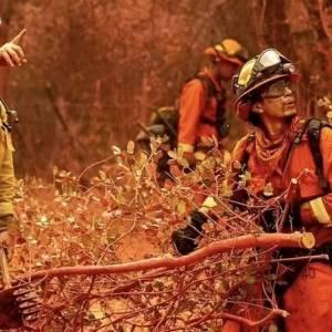 加州大火,上千公顷树林被烧,而纵火者却说,是为了烧熊尿喝