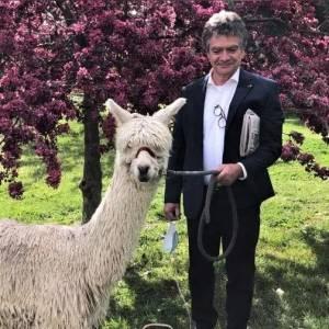 """比利时大使在澳大利亚养了只羊驼,起名叫""""鲍里斯""""?有点传神哈哈哈哈哈!"""