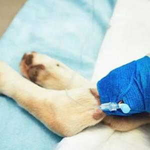 兽医失误导致狗狗莫名死亡?!女子怒:手术很成功,所以狗狗死了?一整天没人通知?!