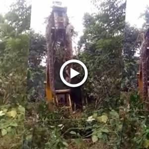 网疯传恐怖巨蟒超震撼! 印度林务局官员也转贴