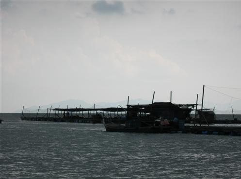 Pulau kukup johor national park(2)