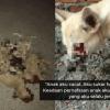 Anak Lahir Cacat Seperti Anjing Yang Dibunuh, Bekas Pekerja Perbandaran Ini Insaf