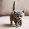 Warga Emas Nekad Cerai Kerana Tak Tahan Dengan Kucing Peliharaan Isteri
