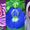 """Bunga Telang Ada Bentuk Vagina Besar Tu?""-Dr.Rafidah Gesa Tidak Normalkan Alat Sulit"