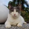 """Sorry, Kucing Hilang"" - Owner Bengang Hotel Haiwan Cuai, Bagi Kucing Lain Sebagai Ganti"