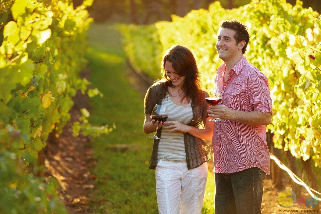 TV - Vines of Red Hill at Mornington Peninsula.jpg