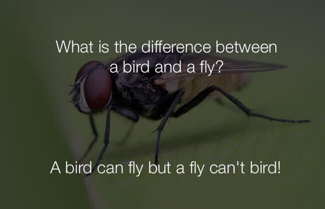 funny-stupid-jokes-what-is-the-difference-between-a-bird-and-a-fly.jpg
