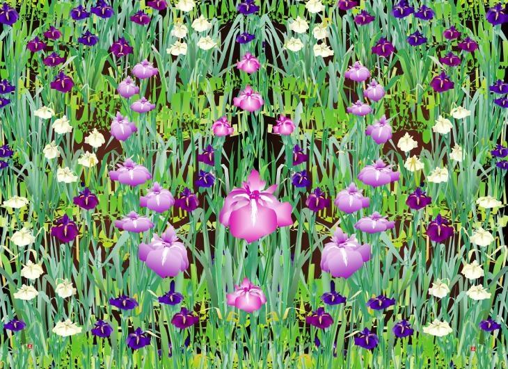 tatsuo-horiuchi-iris.jpg