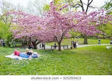 new-york-usa-april-15-260nw-325293413.jpg